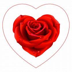 роза в сердце1